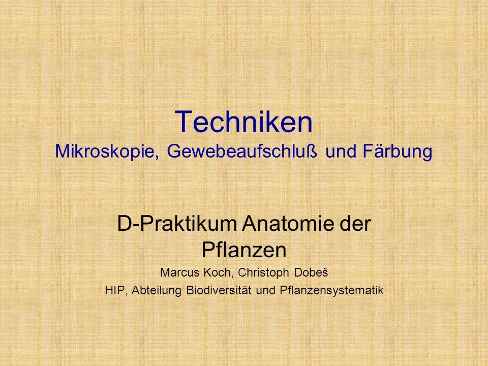 Techniken Mikroskopie, Gewebeaufschluß und Färbung D-Praktikum Anatomie der Pflanzen Marcus Koch, Christoph Dobeš HIP, Abteilung Biodiversität und Pfl