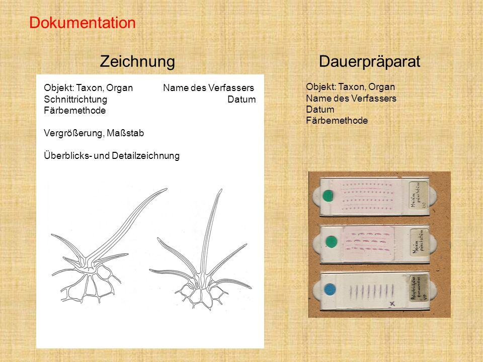 Dokumentation ZeichnungDauerpräparat Objekt: Taxon, Organ Name des Verfassers Schnittrichtung Datum Färbemethode Vergrößerung, Maßstab Überblicks- und