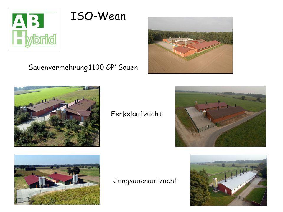 ISO-Wean Sauenvermehrung 1100 GP Sauen Ferkelaufzucht Jungsauenaufzucht