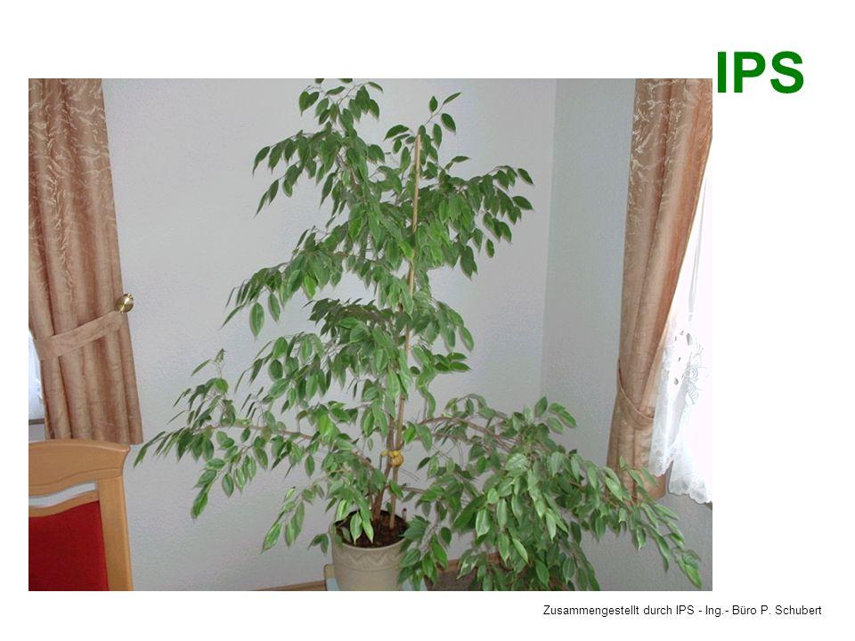 Zusammengestellt durch IPS - Ing.- Büro P. Schubert IPS Richtige Temperaturen Im Wohnbereich und Küche 20°C, im Bad 21°C, im Schlafzimmer tags 18°C, n