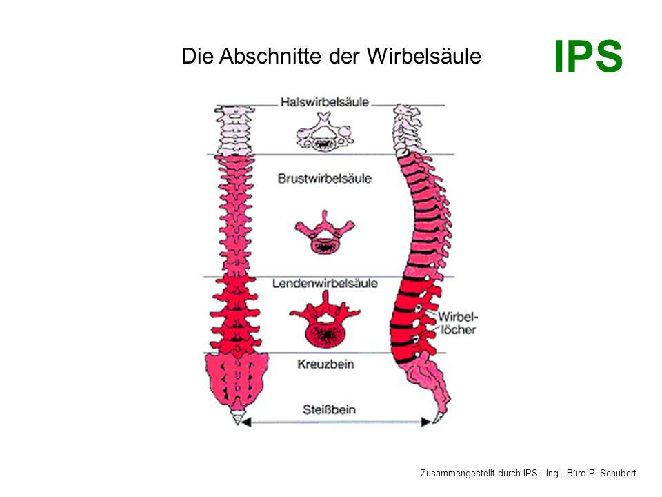 Die Abschnitte der Wirbelsäule Zusammengestellt durch IPS - Ing.- Büro P. Schubert IPS
