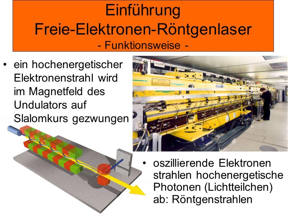 Einführung Freie-Elektronen-Röntgenlaser - Funktionsweise - ein hochenergetischer Elektronenstrahl wird im Magnetfeld des Undulators auf Slalomkurs ge