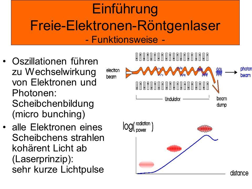 Einführung Freie-Elektronen-Röntgenlaser - Funktionsweise - Oszillationen führen zu Wechselwirkung von Elektronen und Photonen: Scheibchenbildung (mic