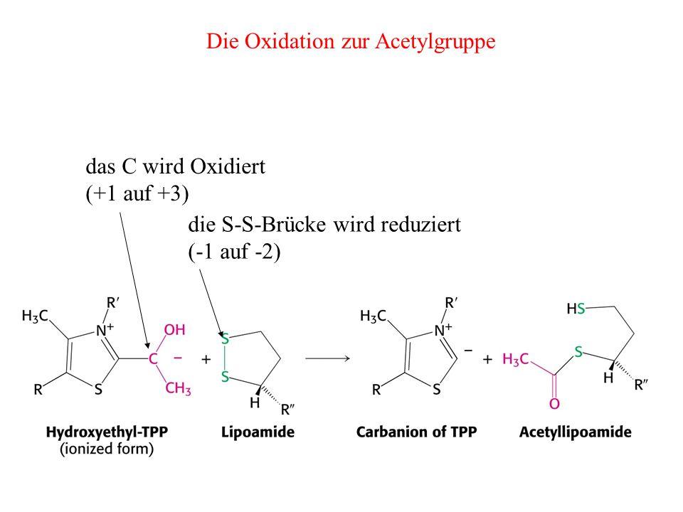 die S-S-Brücke wird reduziert (-1 auf -2) das C wird Oxidiert (+1 auf +3) Die Oxidation zur Acetylgruppe