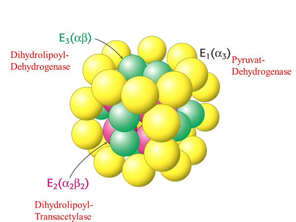 Pyruvat- Dehydrogenase Dihydrolipoyl- Transacetylase Dihydrolipoyl- Dehydrogenase