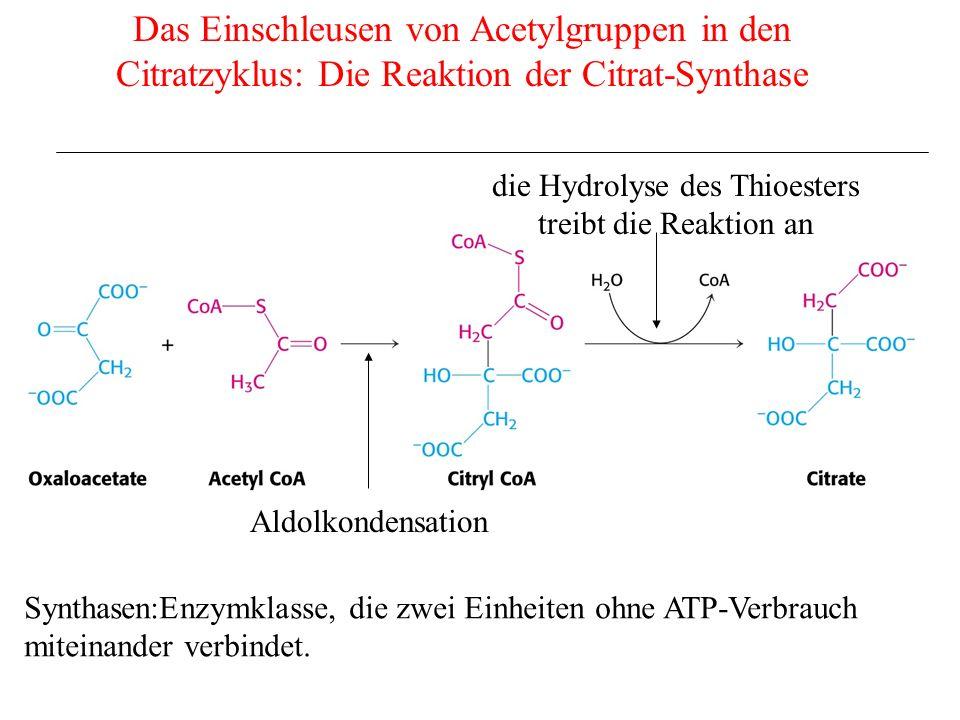 Das Einschleusen von Acetylgruppen in den Citratzyklus: Die Reaktion der Citrat-Synthase die Hydrolyse des Thioesters treibt die Reaktion an Aldolkond