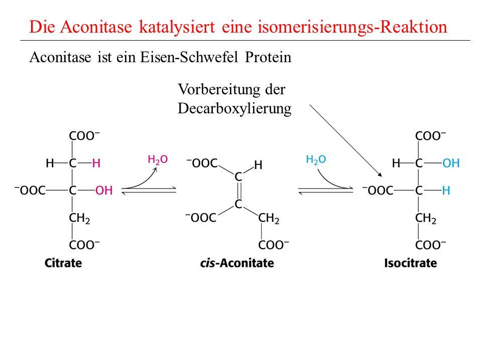 Die Aconitase katalysiert eine isomerisierungs-Reaktion Aconitase ist ein Eisen-Schwefel Protein Vorbereitung der Decarboxylierung