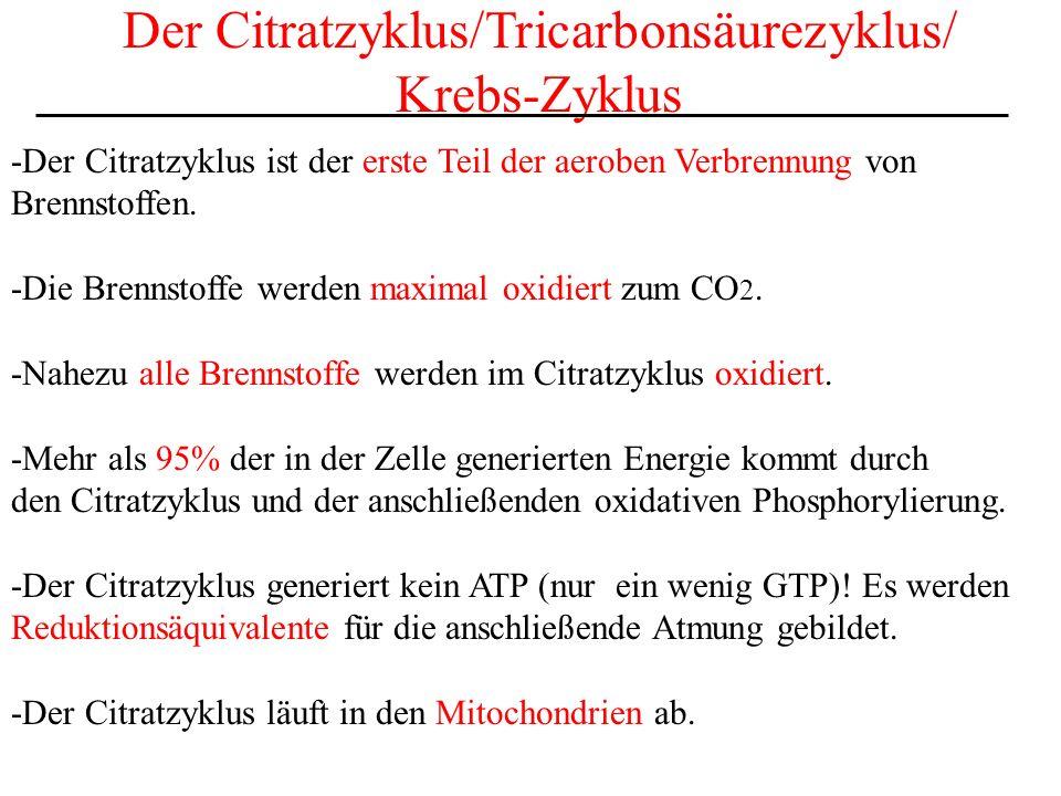 Der Citratzyklus/Tricarbonsäurezyklus/ Krebs-Zyklus -Der Citratzyklus ist der erste Teil der aeroben Verbrennung von Brennstoffen. -Die Brennstoffe we