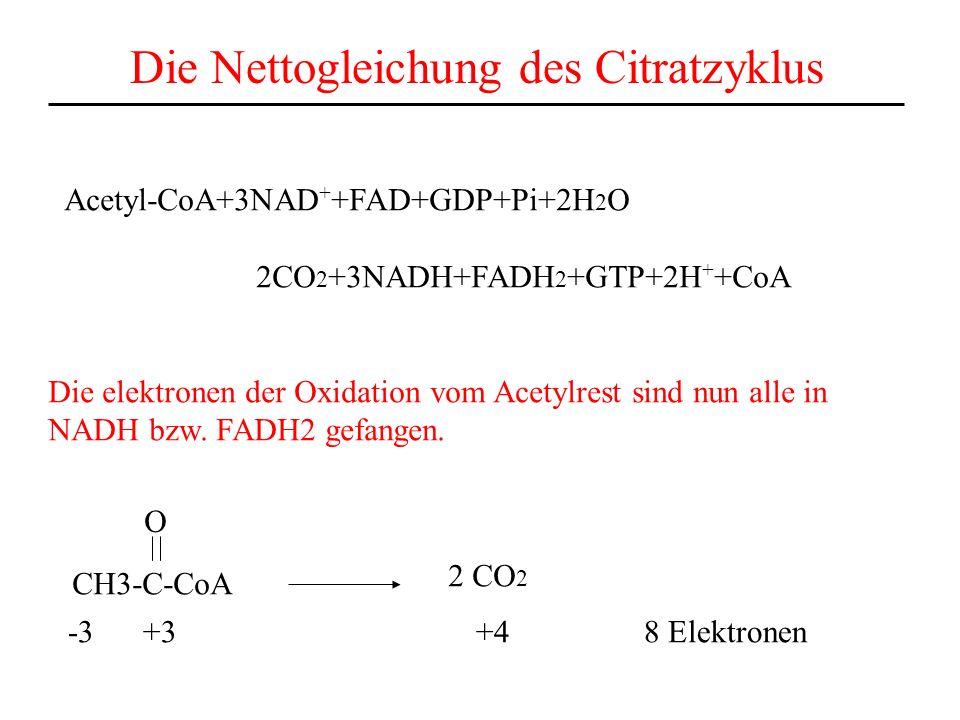 Die Nettogleichung des Citratzyklus Acetyl-CoA+3NAD + +FAD+GDP+Pi+2H 2 O 2CO 2 +3NADH+FADH 2 +GTP+2H + +CoA Die elektronen der Oxidation vom Acetylres