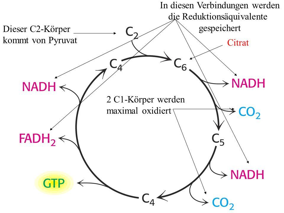 Dieser C2-Körper kommt von Pyruvat In diesen Verbindungen werden die Reduktionsäquivalente gespeichert 2 C1-Körper werden maximal oxidiert Citrat