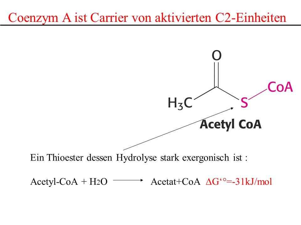 Coenzym A ist Carrier von aktivierten C2-Einheiten Ein Thioester dessen Hydrolyse stark exergonisch ist : Acetyl-CoA + H 2 OAcetat+CoA G°=-31kJ/mol