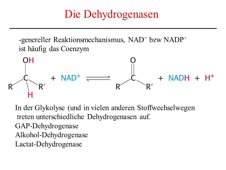 Die Dehydrogenasen -genereller Reaktionsmechanismus, NAD + bzw NADP + ist häufig das Coenzym In der Glykolyse (und in vielen anderen Stoffwechselwegen