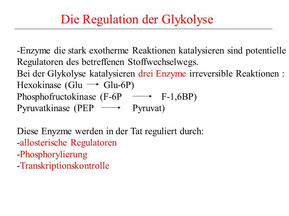 Die Regulation der Glykolyse -Enzyme die stark exotherme Reaktionen katalysieren sind potentielle Regulatoren des betreffenen Stoffwechselwegs. Bei de