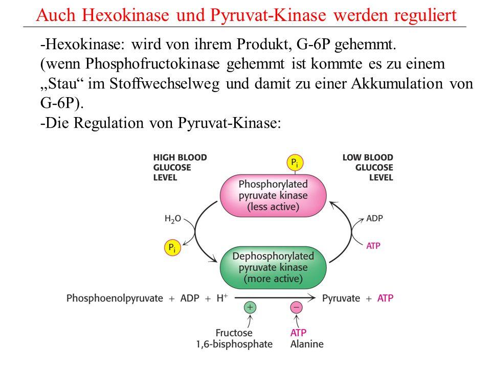 Auch Hexokinase und Pyruvat-Kinase werden reguliert -Hexokinase: wird von ihrem Produkt, G-6P gehemmt. (wenn Phosphofructokinase gehemmt ist kommte es