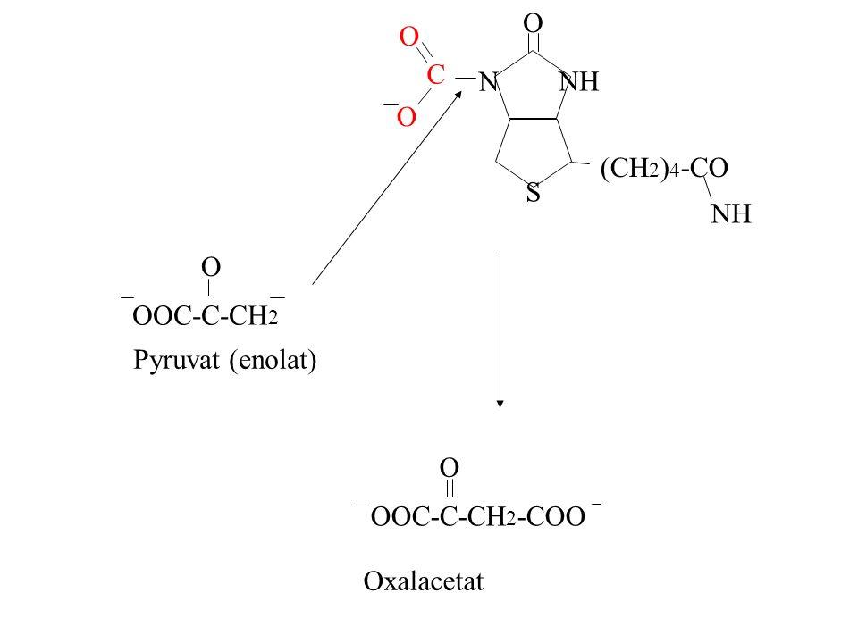 O NH N S (CH 2 ) 4 -CO NH C O O OOC-C-CH 2 O OOC-C-CH 2 -COO O Oxalacetat Pyruvat (enolat)
