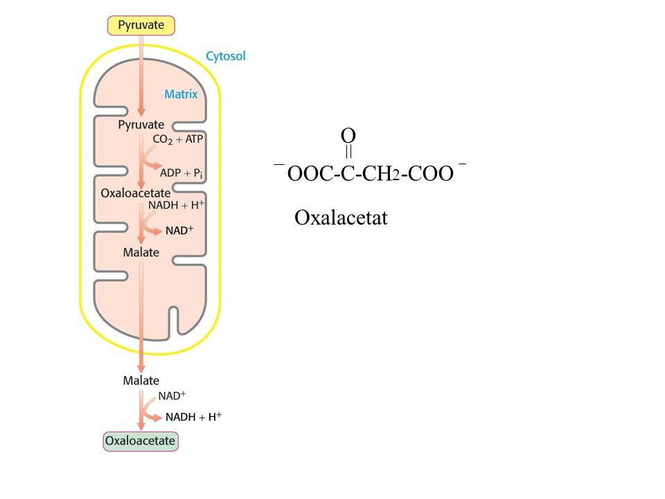 OOC-C-CH 2 -COO O Oxalacetat