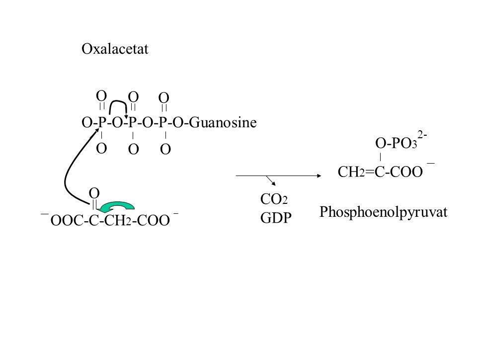 OOC-C-CH 2 -COO O Oxalacetat O-P-O-P-O-P-O-Guanosine O O O O OO CO 2 GDP CH 2 =C-COO O-PO 3 2- Phosphoenolpyruvat