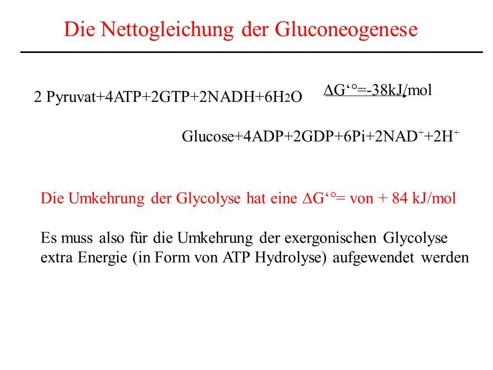 Die Nettogleichung der Gluconeogenese 2 Pyruvat+4ATP+2GTP+2NADH+6H 2 O Glucose+4ADP+2GDP+6Pi+2NAD + +2H + G°=-38kJ/mol Die Umkehrung der Glycolyse hat