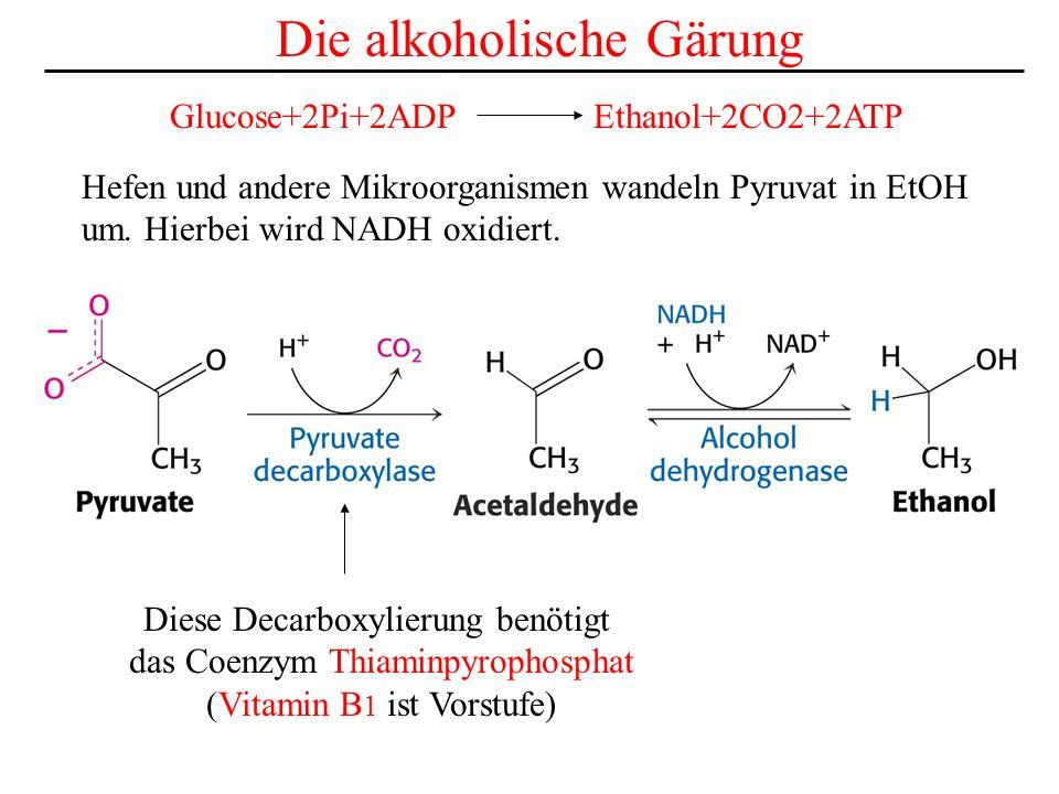 Hefen und andere Mikroorganismen wandeln Pyruvat in EtOH um. Hierbei wird NADH oxidiert. Die alkoholische Gärung Diese Decarboxylierung benötigt das C