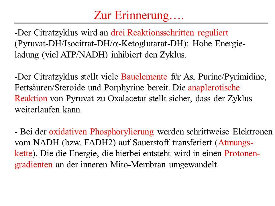 Zur Erinnerung…. -Der Citratzyklus wird an drei Reaktionsschritten reguliert (Pyruvat-DH/Isocitrat-DH/ -Ketoglutarat-DH): Hohe Energie- ladung (viel A