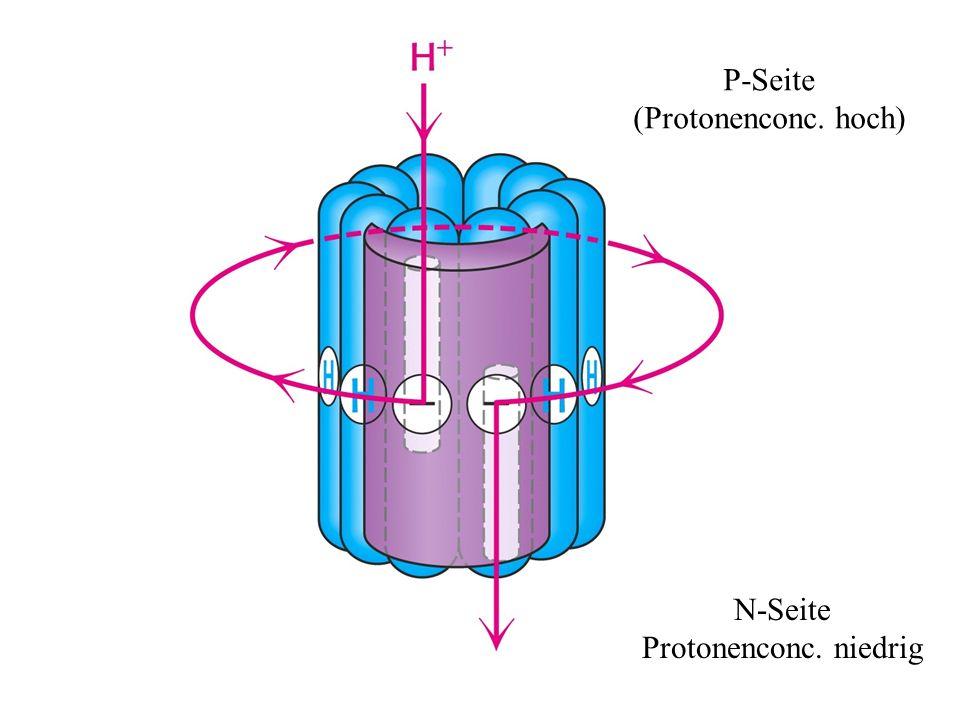 P-Seite (Protonenconc. hoch) N-Seite Protonenconc. niedrig