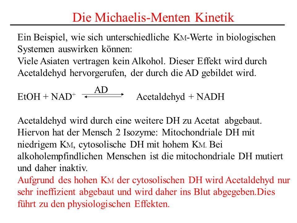 Die Michaelis-Menten Kinetik Ein Beispiel, wie sich unterschiedliche K M -Werte in biologischen Systemen auswirken können: Viele Asiaten vertragen kein Alkohol.
