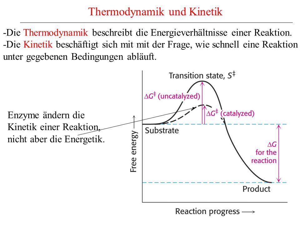 Thermodynamik und Kinetik -Die Thermodynamik beschreibt die Energieverhältnisse einer Reaktion.