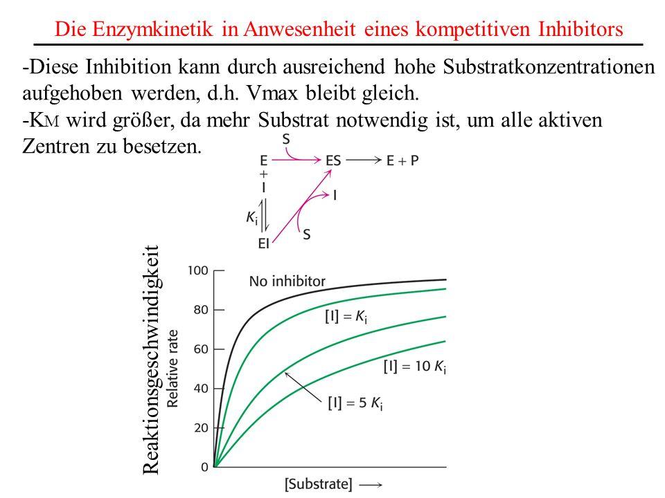 Die Enzymkinetik in Anwesenheit eines kompetitiven Inhibitors -Diese Inhibition kann durch ausreichend hohe Substratkonzentrationen aufgehoben werden, d.h.