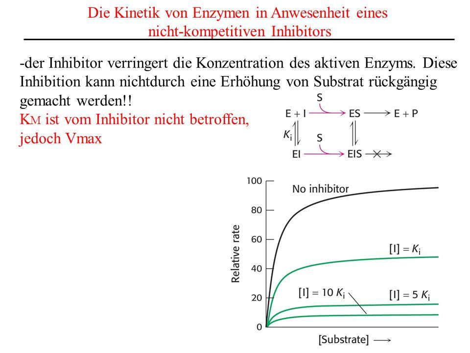 Die Kinetik von Enzymen in Anwesenheit eines nicht-kompetitiven Inhibitors -der Inhibitor verringert die Konzentration des aktiven Enzyms.