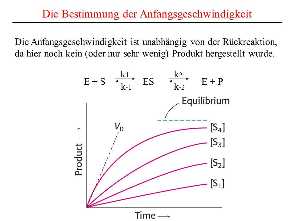 E + S ES E + P k1k1 k2k2 k -1 k -2 Die Bestimmung der Anfangsgeschwindigkeit Die Anfangsgeschwindigkeit ist unabhängig von der Rückreaktion, da hier noch kein (oder nur sehr wenig) Produkt hergestellt wurde.
