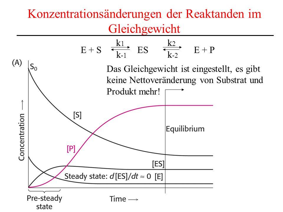 Konzentrationsänderungen der Reaktanden im Gleichgewicht E + S ES E + P k1k1 k2k2 k -1 k -2 Das Gleichgewicht ist eingestellt, es gibt keine Nettoveränderung von Substrat und Produkt mehr!