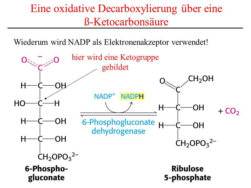 Eine oxidative Decarboxylierung über eine ß-Ketocarbonsäure Wiederum wird NADP als Elektronenakzeptor verwendet! hier wird eine Ketogruppe gebildet
