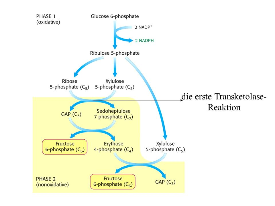 die erste Transketolase- Reaktion