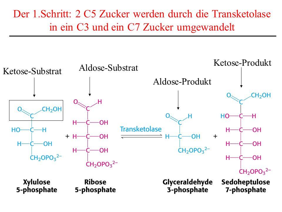 Der 1.Schritt: 2 C5 Zucker werden durch die Transketolase in ein C3 und ein C7 Zucker umgewandelt Ketose-Substrat Aldose-Substrat Aldose-Produkt Ketos