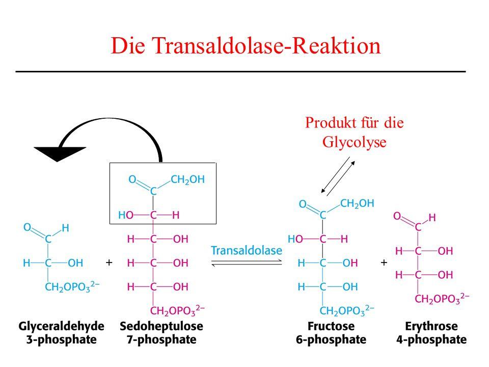 Produkt für die Glycolyse Die Transaldolase-Reaktion