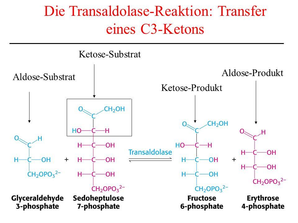 Die Transaldolase-Reaktion: Transfer eines C3-Ketons Aldose-Substrat Ketose-Substrat Ketose-Produkt Aldose-Produkt