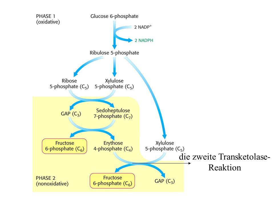 die zweite Transketolase- Reaktion