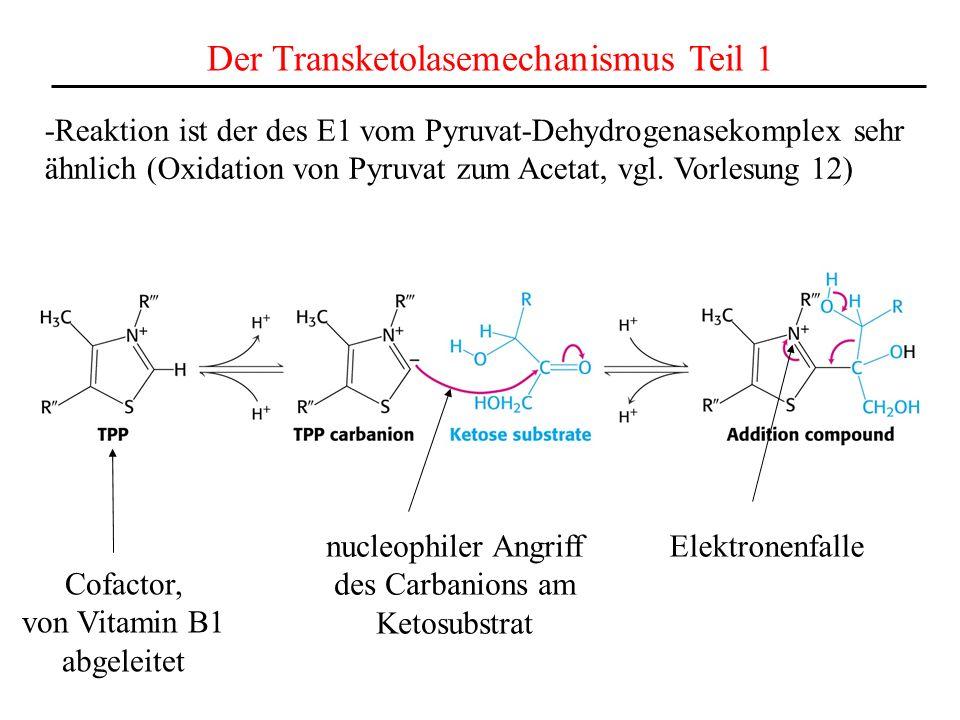 Der Transketolasemechanismus Teil 1 -Reaktion ist der des E1 vom Pyruvat-Dehydrogenasekomplex sehr ähnlich (Oxidation von Pyruvat zum Acetat, vgl. Vor