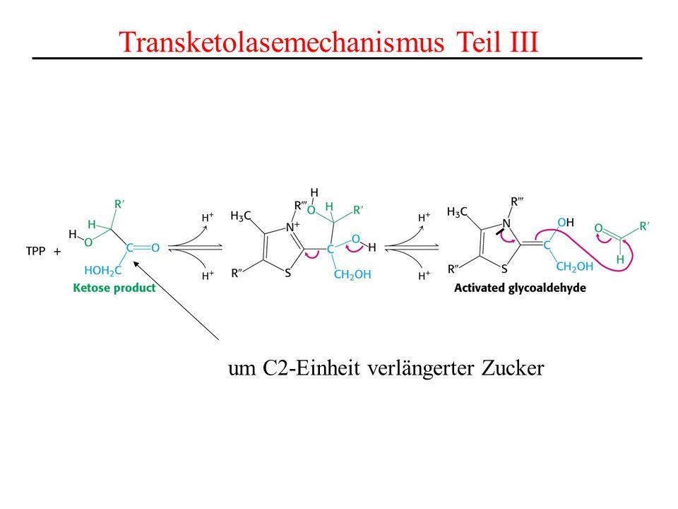 Transketolasemechanismus Teil III um C2-Einheit verlängerter Zucker