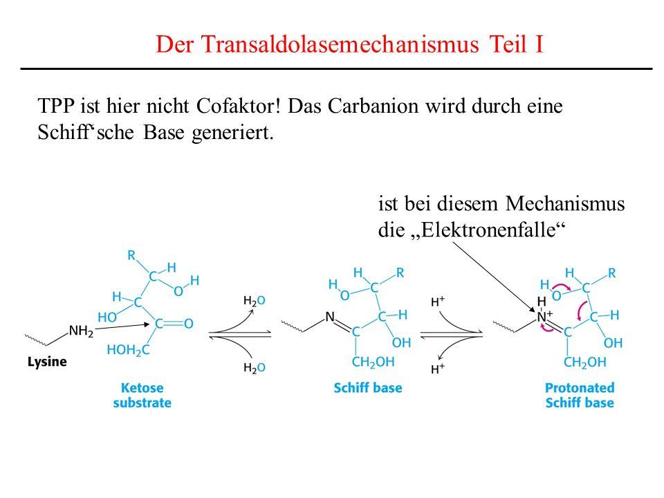 Der Transaldolasemechanismus Teil I TPP ist hier nicht Cofaktor! Das Carbanion wird durch eine Schiffsche Base generiert. ist bei diesem Mechanismus d