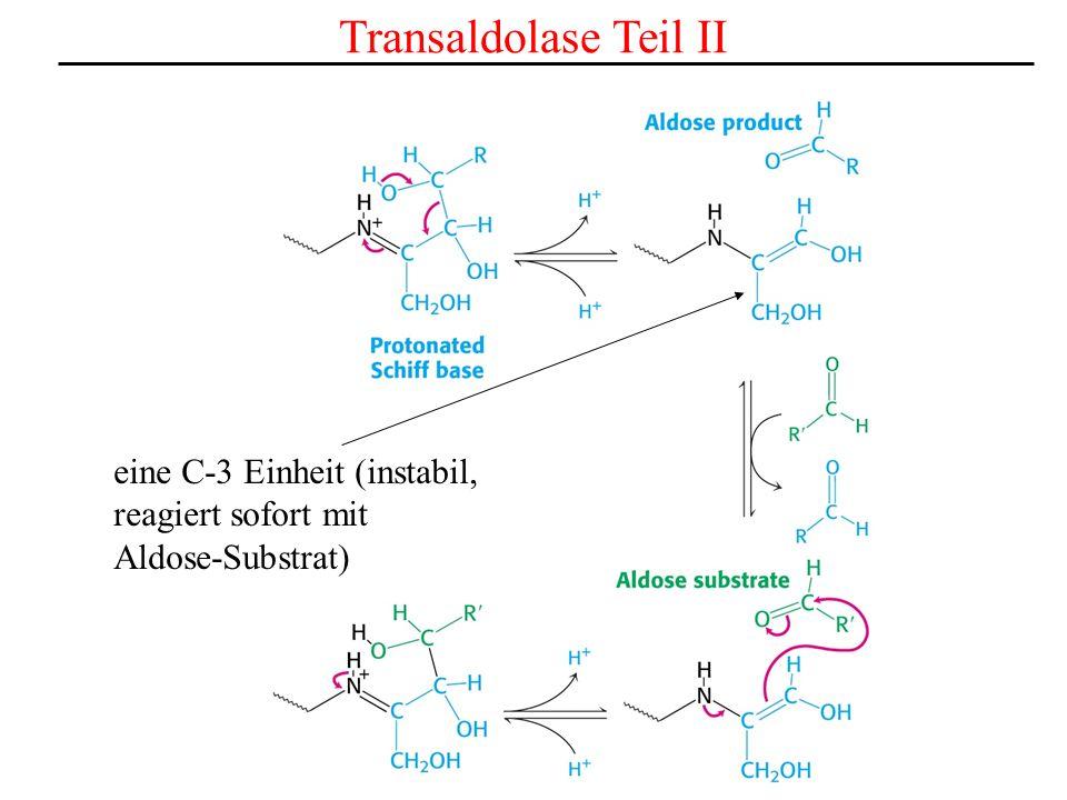 Transaldolase Teil II eine C-3 Einheit (instabil, reagiert sofort mit Aldose-Substrat)