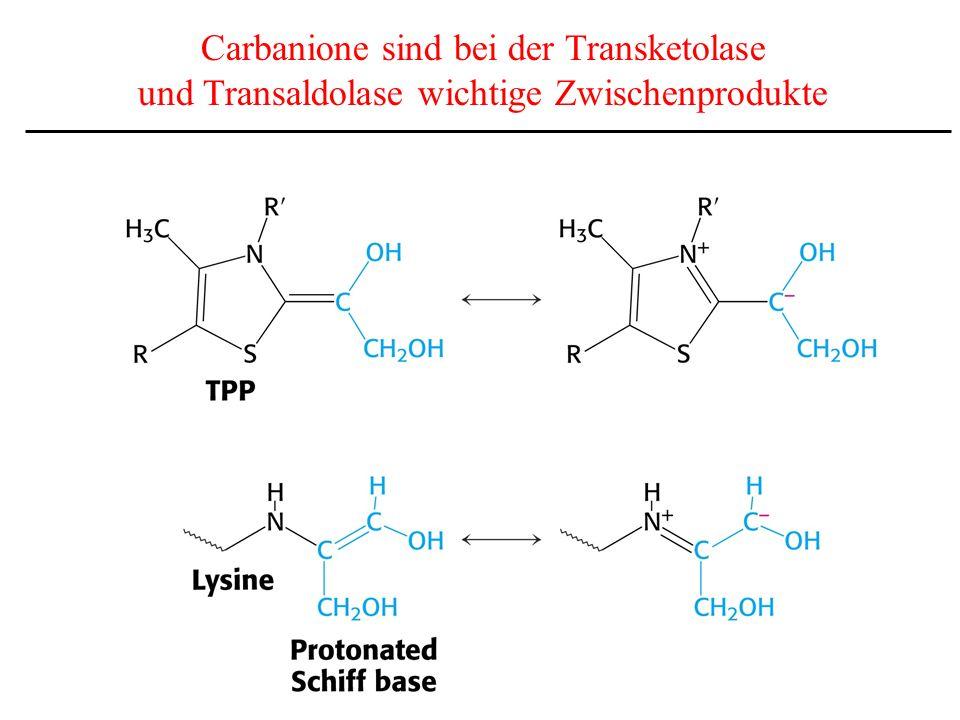 Carbanione sind bei der Transketolase und Transaldolase wichtige Zwischenprodukte