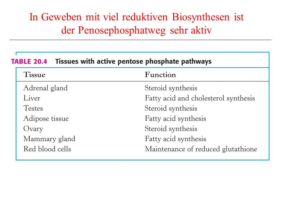 In Geweben mit viel reduktiven Biosynthesen ist der Penosephosphatweg sehr aktiv