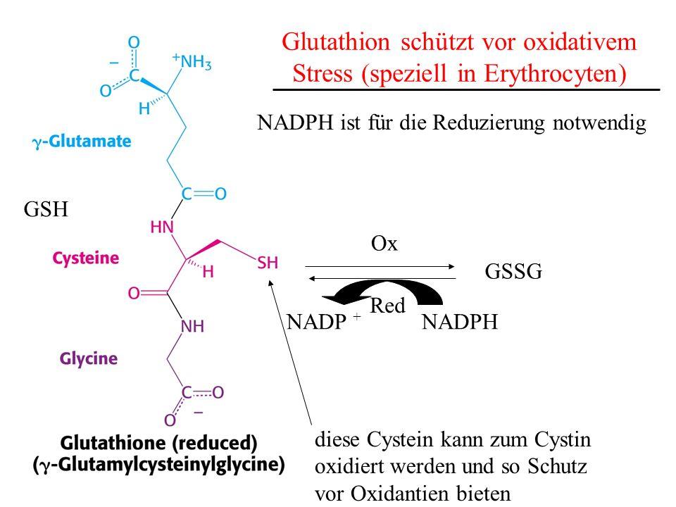 Glutathion schützt vor oxidativem Stress (speziell in Erythrocyten) diese Cystein kann zum Cystin oxidiert werden und so Schutz vor Oxidantien bieten