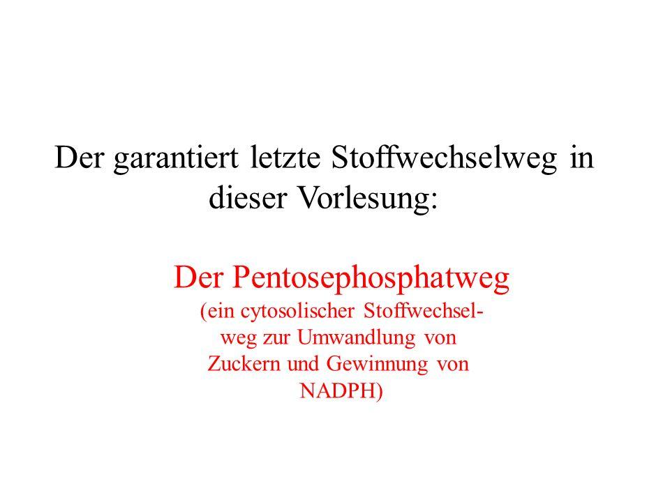 Der Pentosephosphatweg (ein cytosolischer Stoffwechsel- weg zur Umwandlung von Zuckern und Gewinnung von NADPH) Der garantiert letzte Stoffwechselweg