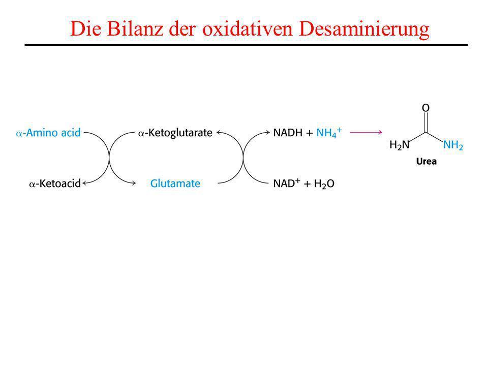 Die Bilanz der oxidativen Desaminierung