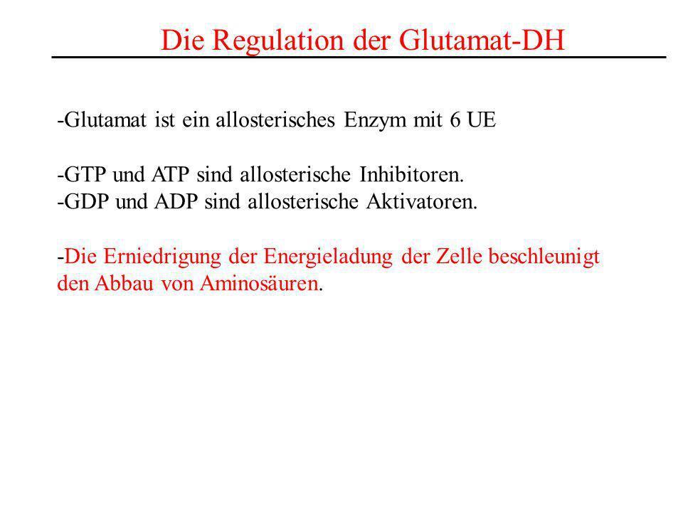 Die Regulation der Glutamat-DH -Glutamat ist ein allosterisches Enzym mit 6 UE -GTP und ATP sind allosterische Inhibitoren. -GDP und ADP sind alloster