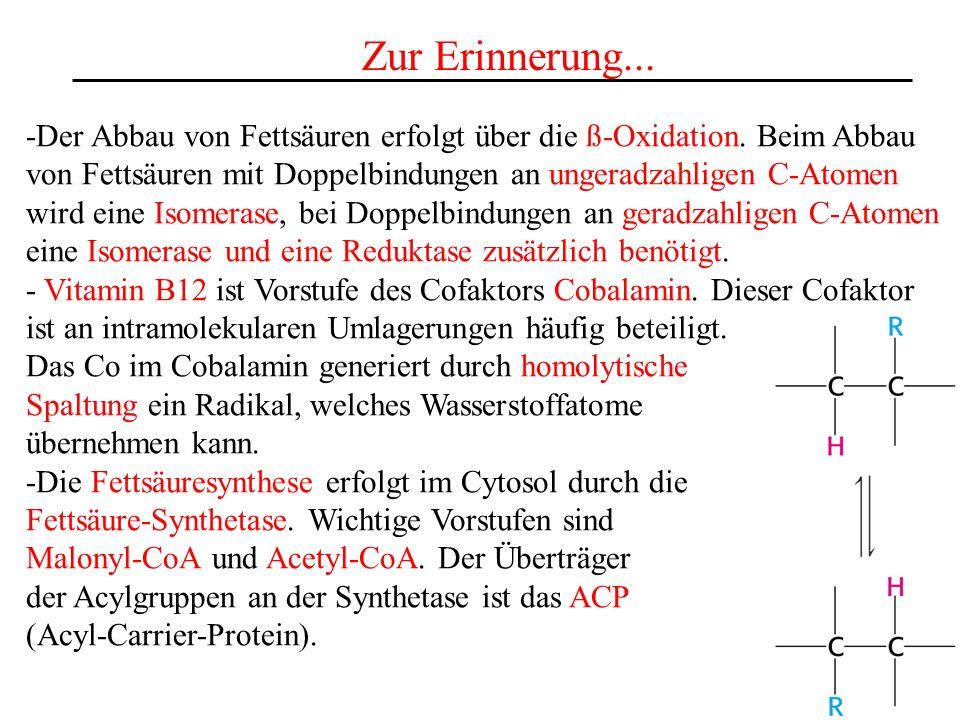 Zur Erinnerung... -Der Abbau von Fettsäuren erfolgt über die ß-Oxidation. Beim Abbau von Fettsäuren mit Doppelbindungen an ungeradzahligen C-Atomen wi