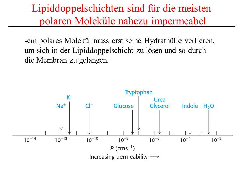 Lipiddoppelschichten sind für die meisten polaren Moleküle nahezu impermeabel -ein polares Molekül muss erst seine Hydrathülle verlieren, um sich in d