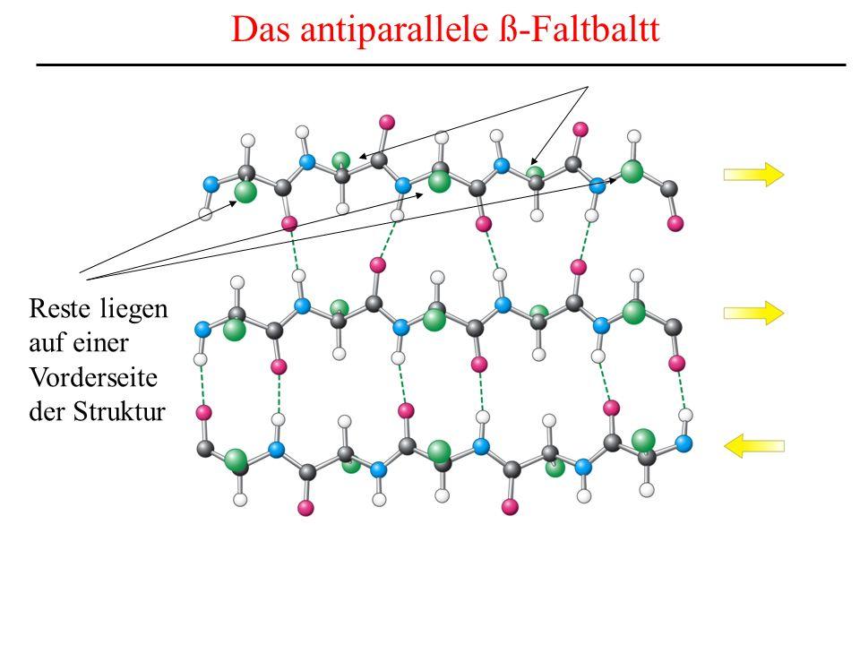 Reste liegen auf einer Vorderseite der Struktur Das antiparallele ß-Faltbaltt